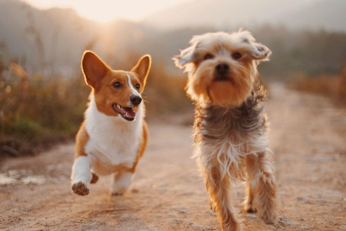 Trabajar con animales: Guía y Posibilidades